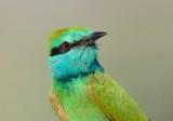 birds_of_israel