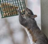IMG_3190 How my bird feeders get chewed up!