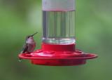 Cold Hummingbird