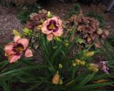 P6190070 Daylilies - A Wide Angle View