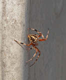 SIL10113 I encouraged the spider to move from the mailbox opener