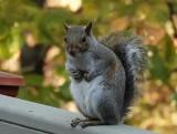 DSC01164 squirrel