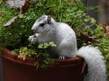 DSC01738 In my parsley pot?!!!!