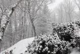 DSC03907 First Snow