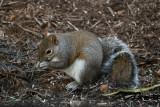 DSC04481 squirrel through window