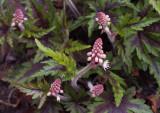 P4050057 Surprise blossoms!