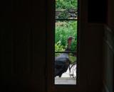 DSC03554 Through front door sidelight