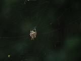 P8080156 Same spider and web with Panasonic 100-400