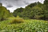 Middle Pond -- Burnham Beeches