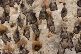 Bats in the Crusader Citadel
