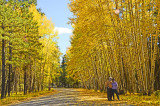 2017 October White Mountains, AZ - Quakin Aspen Quest