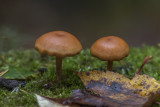 Champignons - Mushrooms - Lichens