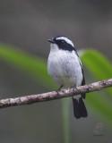 Birds of Mindanao