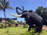 Elephant in front of the Prima Center, Conakry