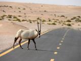 Al Qudra Cycle Track