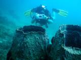 Dive 4 - Dili Rock