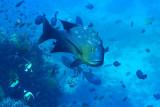 Diving Timor-Leste