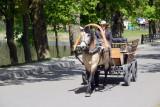Horse-drawn tourist wagon, Nesvizh