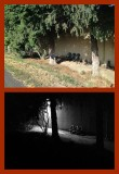 Rephotography: Miscellaneous