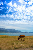 Horse at Kaikoura