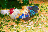 Colourful hen painting