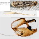 0412 - Niditinea orleansella IMG_4450.jpg