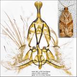 3688 - Garden Tortrix - Clepsis peritana