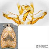 3501 - Maple Leaftier - Acleris forsskaleana