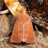 Myles Standish Moths 4-29-17