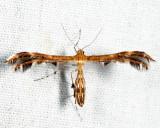 6102 - Dejongia lobidactylus
