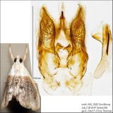 4888 - Sooty Lipocosmodes - Lipocosmodes fuliginosalis IMG_5926.jpg