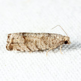 3110 - Eucosma gomonana