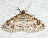 7422 - Unadorned Carpet - Hydrelia inornata