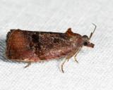 2866 - Spirea Leaftier - Evora hemidesma