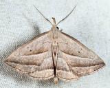 8357 - Slant-lined Owlet - Macrochilo absorptalis