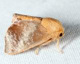 4681 - Crowned Slug - Isa textula