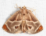 4669 – Shagreened Slug Moth – Apoda biguttata