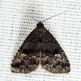 8428 - Dyspyralis nigellus