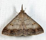 8384.1 - Smooth-lined Renia - Renia flavipunctalis