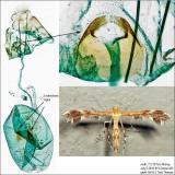 6102 – Dejongia lobidactylus