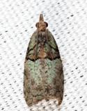 3286 - Raspberry Leaf-roller - Epinotia medioviridana