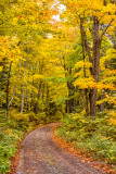 **107.56 -  Grand Portage: Rengo Road, Yellow Path Vertical