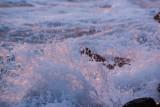 Suzan McEvoy - Splash 02.jpg