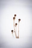Suzan McEvoy - Minimalism 08