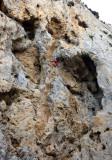 Climbing at Kalymnos, a Greek island