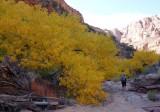 Day 3 Dark canyon in autumn