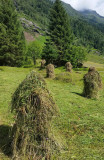 Wonderful hay bales in the valley
