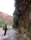 Day 4 Sowats canyon dripping water seeps