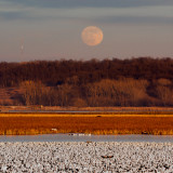 Long Night Moon with Geese