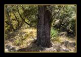 16 11 13 199 Madera Canyon